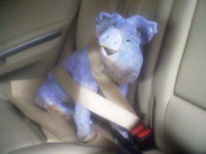 Ceramic pig, by artist Bruce Howdle, strapped in for the ride to his new home.