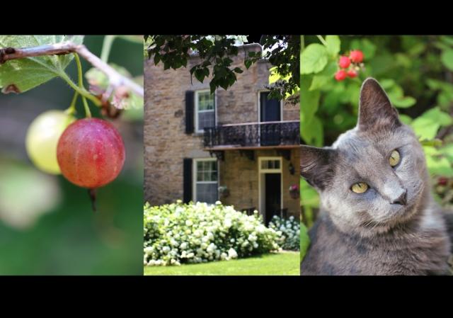 allaroundthegooseberrybush