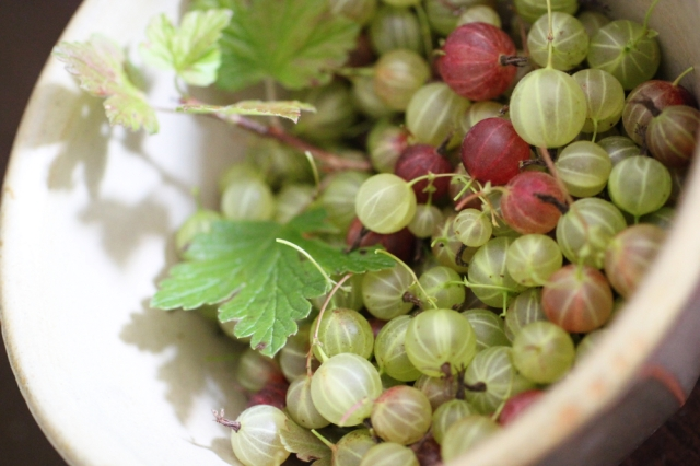 bowlofgooseberries