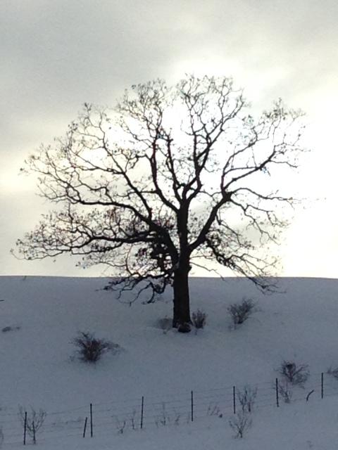 photo-470