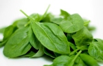 Smooth-Leafed-Spinach-300x200
